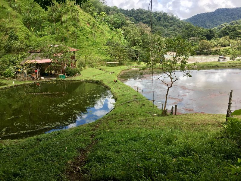 la piscicultura un proyecto de reconciliaci n que crece