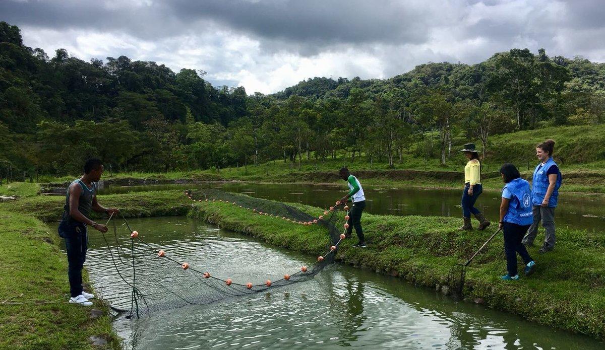 La piscicultura un proyecto de reconciliaci n que crece for Elaboracion de estanques para piscicultura