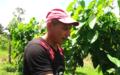 En Arauca la apuesta para la reconciliación es el Sacha Inchi