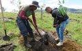 El aguacate hass: una muestra de berraquera en Cauca