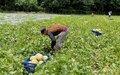 Melón y plantas aromáticas, las nuevas apuestas productivas de excombatientes en La Guajira
